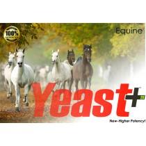 Yeast+